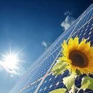 Solar electrical Sunflower